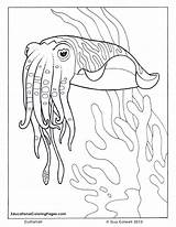 Coloring Ocean Cuttlefish Sea Fish Animal Colouring Printable Animals Sheets Adult Drawings Adults Seashore Realistic Colouringpages Colorful Outline Clipart Preschoolers sketch template