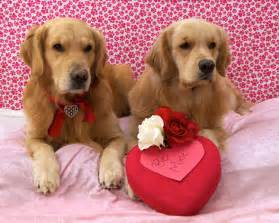 Happy Valentine's Day Dog