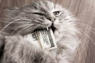 how much do cats cost how much does a cat cost 6 ways this cat saves money