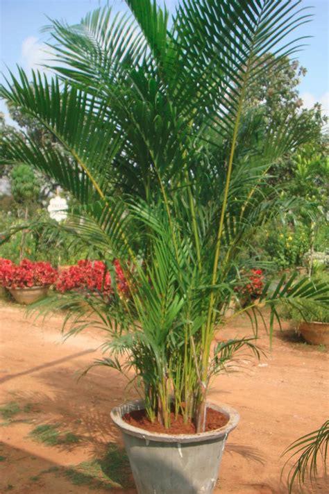 Plantas para purificar o ar em casa | Anagê - Blog
