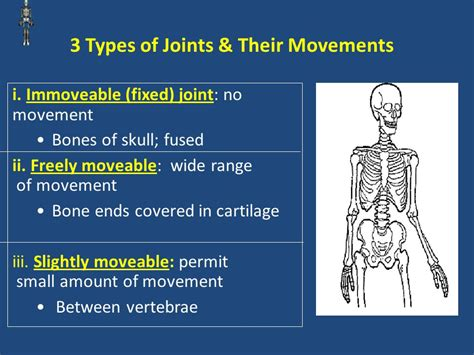 Muscular And Skeletal Systems.