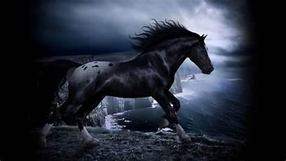 Horse Desktop Themes Background Wallpapersafari