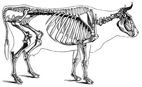 skeleton clipart