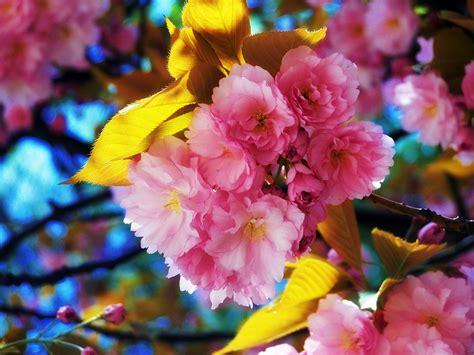 Beautiful Flowers Wallpapers