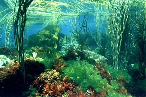 fonds de cuisine biocean récolte producteur algues et plantes marines