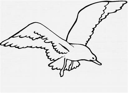 Seagull Coloring Bird Clipart Flying Sea Drawing