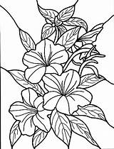 Coloring Hibiscus Flower Sheets Flowers Printable Template Colouring Bestcoloringpagesforkids Sheet Adults Tropical Drawing Judy Moody Pretty Visit sketch template