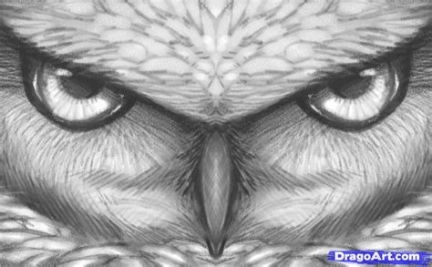 draw owl eyes draw  owl face step  step