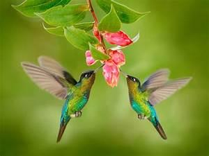 Birds, Pair, Feeders, On, Pink, Flower, Wallpaper, For, Desktop