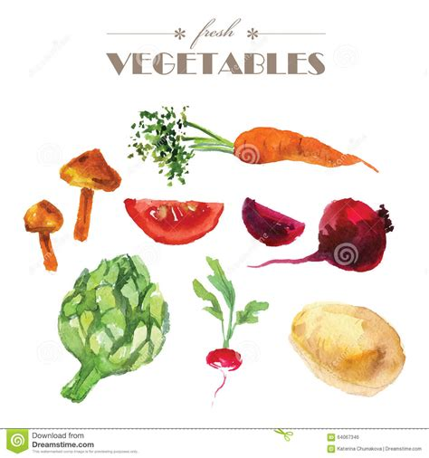 illustration cuisine vector set of watercolor fresh vegetables on white