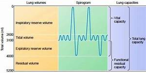 Ankylosing Spondylitis Chart Lung Volumes And Capacities Owlcation