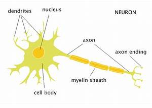 The Neuron
