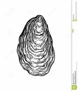 Oyster shell ink sketch. stock vector. Illustration of ...