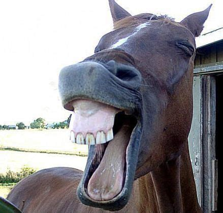 42 Pics of Funny Faces That Will Make You Laugh Out Loud ...