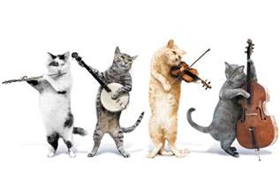 The 4 Cats
