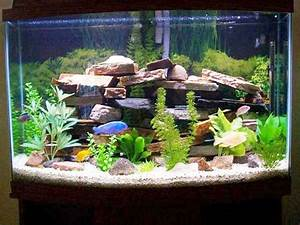 How To Make Fish Tank Decorations At Home - Fish Tank