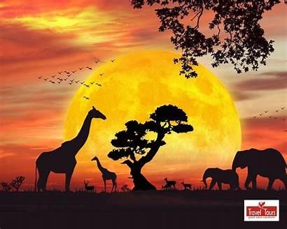 Safari Wallpapers Jungle Clipart African Animals Sunset