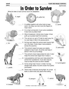 results for animal adaptations worksheet guest the mailbox work animal adaptations