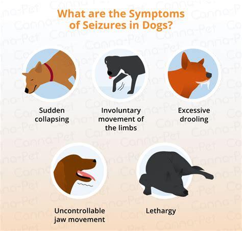 Dog Cluster Seizures