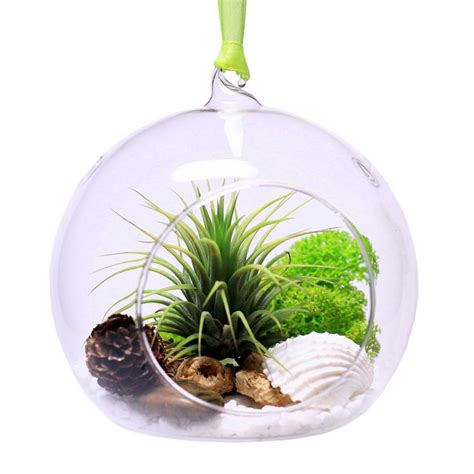 kitchen accessories and decor ideas tillandsia or airplant 8 ideas for growing rootless