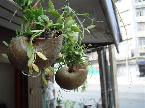 sea shell planter ideas  show   plants ideas