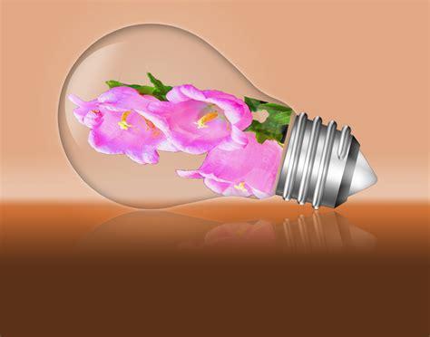 flowers in light bulbs flowers in a light bulb