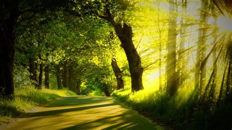 Wallpaper Free Tree Images by Forest Forest Nature Display Free Images High