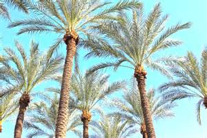 palm trees   my town