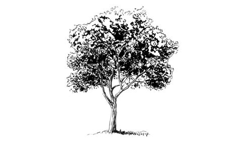 realistic apple tree drawing step by step landscape drawing tutorials