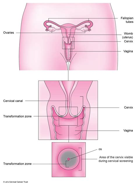 shedding of uterine lining 100 shedding of uterine lining 5 signs from your