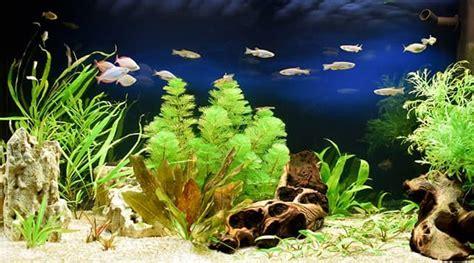 wie warm muss ein aquarium sein fische tipps f 252 r ein artgerechtes aquarium gvb hausinfo