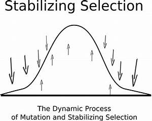 The Modes Of Natural Selection
