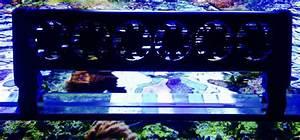 Kühlschrank Temperatur Zu Hoch : aquarium temperatur zu hoch blog aquapro2000 ~ Yasmunasinghe.com Haus und Dekorationen