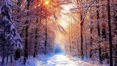 Forest Snow Snowy Winter Wallpapers Creek Wallpapertag