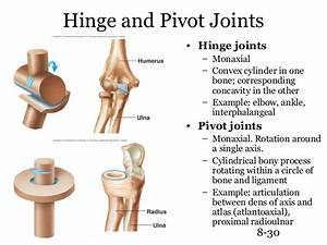 Image Gallery hinge joint examples