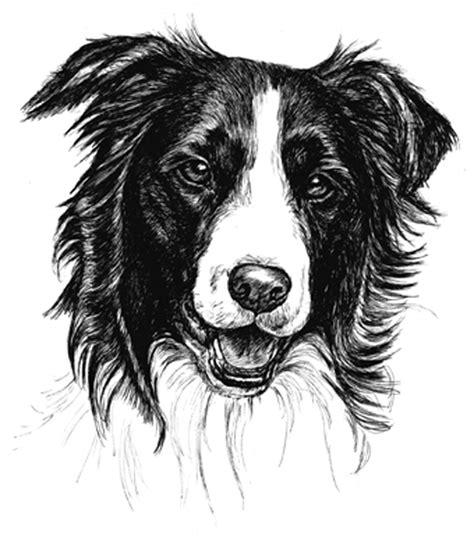border collie puppy receipt book print  townsend