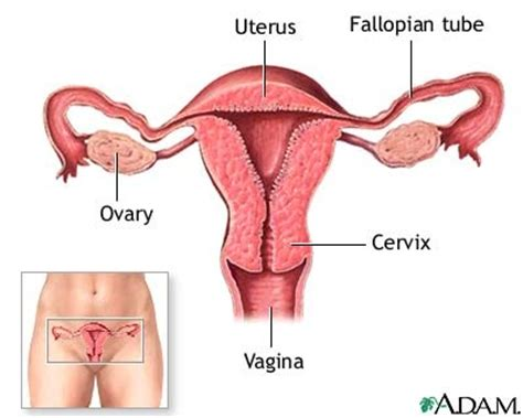 Fibroid Rahim Wanita Comparativeanatomyproject Home