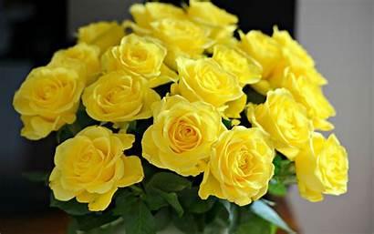 Rose Flowers Yellow Flower Vase Pixelstalk 3d