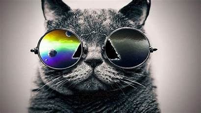 Cat Wallpapers Cool Backgrounds Hipster Galaxy Desktop