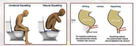 What Is The Proper Way To Poop?  Healthy Food House