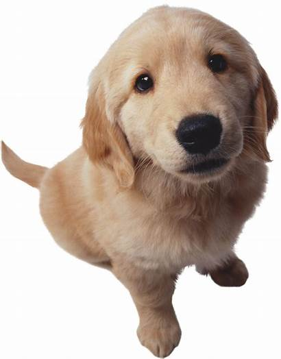 Dog Animales Otros Perros