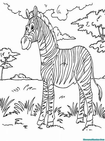 Coloring Zebra Printable Sheets Animal Mewarnai Gambar