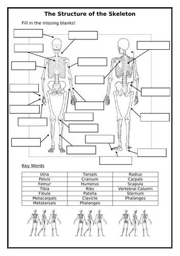label  skeleton worksheet