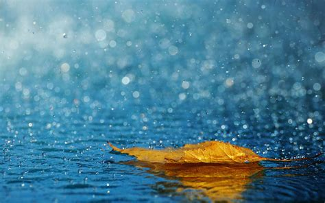 Hd Wallpaper For Mobile Rainy by Rainy Wallpapers Hd Impremedia Net