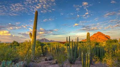 Desert Arizona Landscape Cactus Mountain Nature Wallpapers
