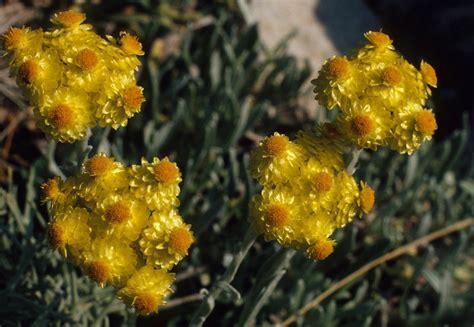 Pflanzen Fürs Kiesbeet by Ein Trockenes Sonniges Kiesbeet Garten Wissen