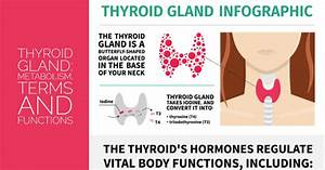 Thyroid Gland Metabolism Terms And Functions Sandra Bloom