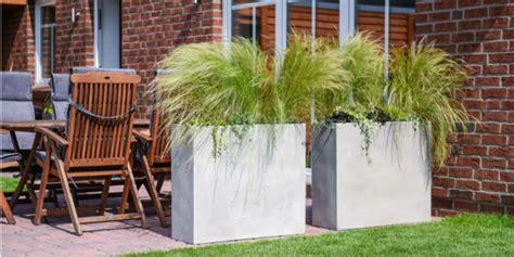 Hochwachsende Pflanzen Sichtschutz by Hochwachsende Balkonpflanzen Sichtschutz