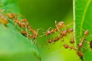 Ameisen Im Garten : ameisen bek mpfen beste tipps zur ameisenbek mpfung ~ Frokenaadalensverden.com Haus und Dekorationen