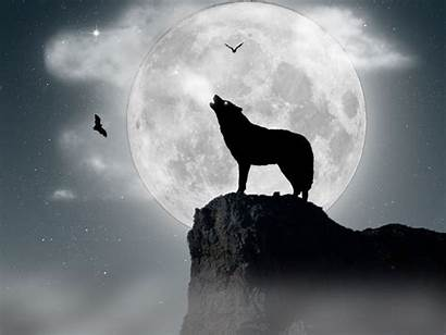 Wolf Howling Wallpapers Definition Desktop Moon 1200